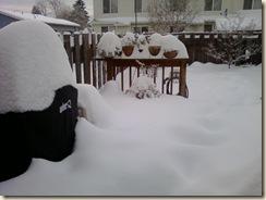 snow - yard