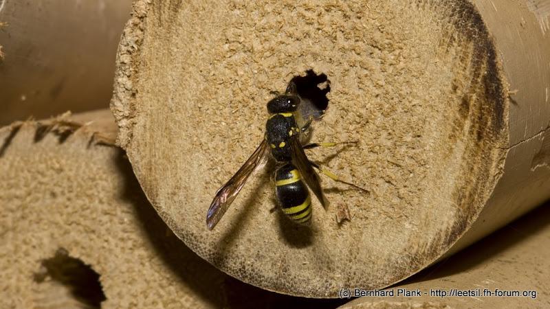 insektenhotel weitere bewohner und besucher dieser nisthilfe photography and more. Black Bedroom Furniture Sets. Home Design Ideas