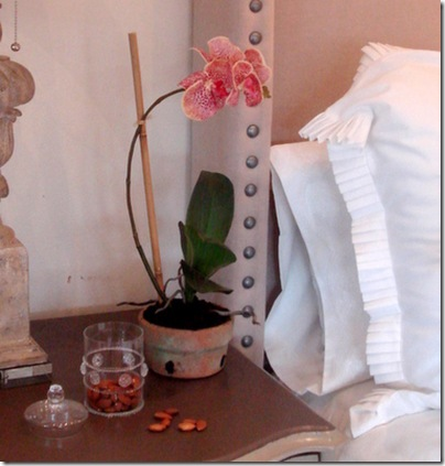 Indulge Decor- phaleneopsis orchid