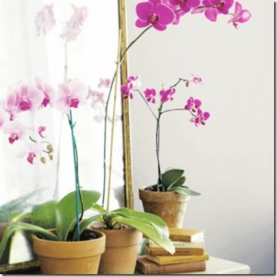 pinkgray_orchids via dress design & decor