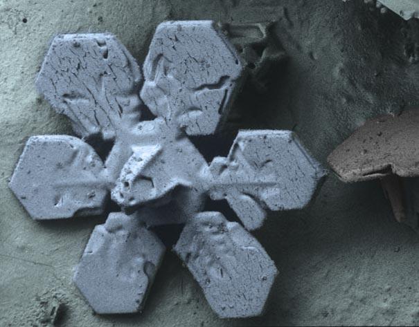 عالم المجهريات Looking-at-the-World-through-a-Microscope-snow2.jpg