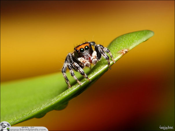 The Most Beautiful Spider in the World (20 pics)