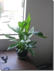 Plants 009