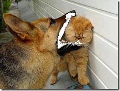 dog_eating_pussy