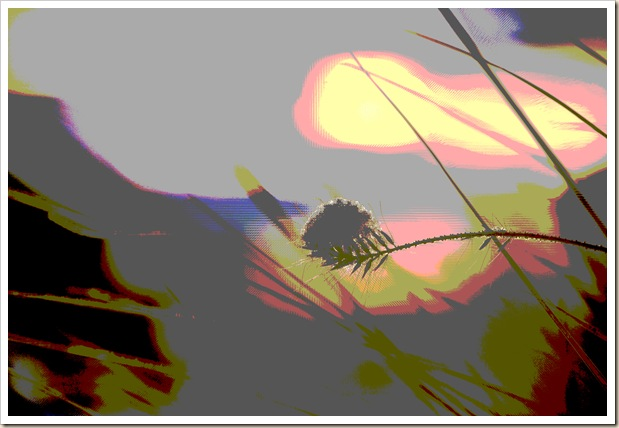 abstract wheat grass 1 copy