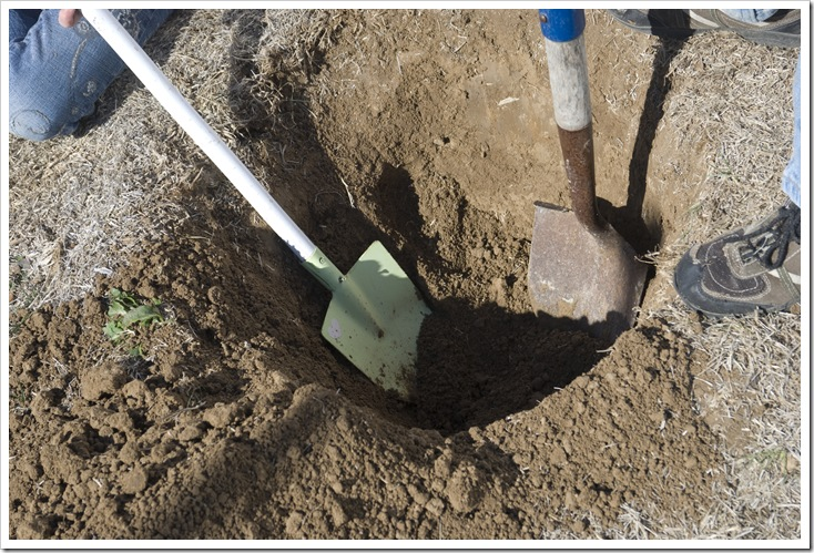 Shovels in hole a