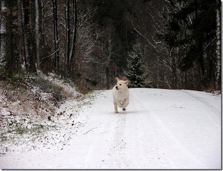 1   leia spring