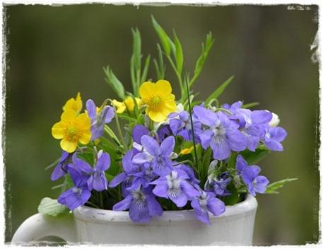 33 blommor