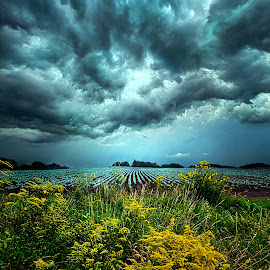 Riders On The Storm by Phil Koch - Landscapes Weather ( vertical, photograph, yellow, storm, leaves, photooftheday, wicounties, love, sky, tree, nature, autumn, bestoftheday, weather, flower, follow, instagood, orange, twilight, agriculture, horizon, portrait, environment, dawn, serene, trees, floral, natural light, wisconsin, ray, chaser, landscape, phil koch, spring, sun, photography, farm, severe, horizons, office, clouds, extreme, park, green, scenic, morning, shadows, wild flowers, field, picoftheday, red, fog, blue, sunset, peace, fall, meadow, summer, landscapephotography, beam, earth, sunrise, landscapes, mist )