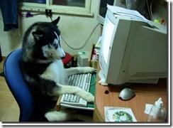 cachorro_lendo_computador_usando_humano_leitor_rusky