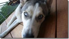 Animais olhos cores lindos (7)
