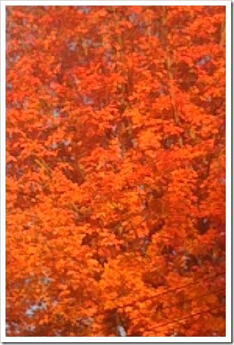 fall 008