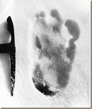 yeti_footprint