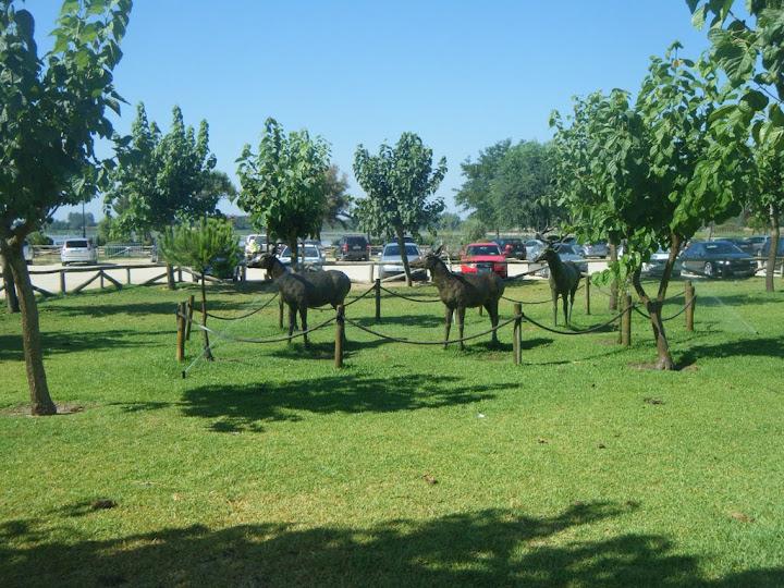 Huelva el Rocío, caballos en la marisma