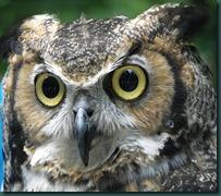 owlex closeup (1)