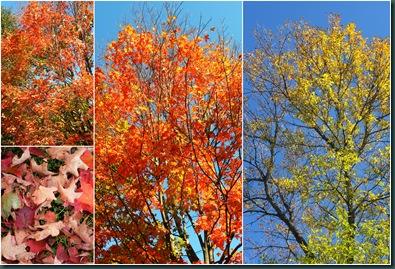 foliage collage
