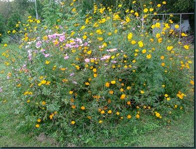 wildflowergarden2 1028 (3)