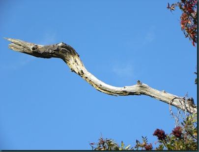 tree bird103110 (4)