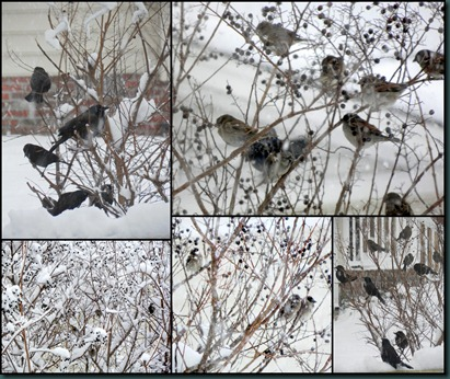 snow birds collage