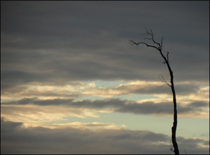 lone tree branch