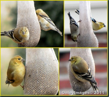 yellow bird collage