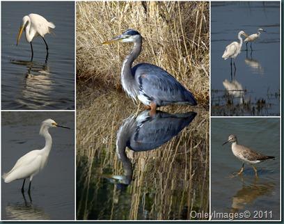 CNWR bird collage