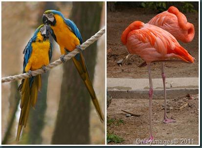 zoo birds collage