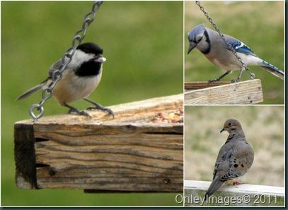 misc bird collage1