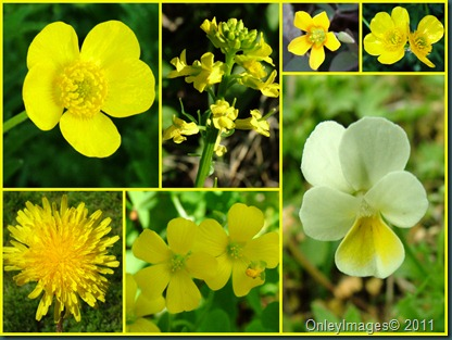 Easter yellow collage