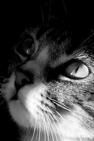 Cute Cat Photo iPhone Desktop Wallpaper