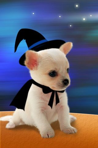 iPhone Wallpaper Halloween Dog Costumes