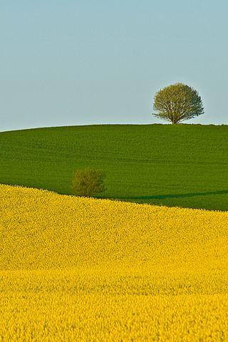 Beautiful Two Fields iPhone Wallpaper