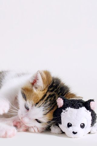 Cute Kitten Nap iPhone Wallpaper