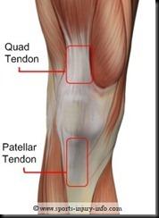knee-tendons-anterior