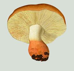 image_thumb6