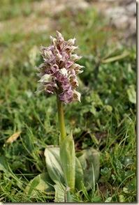 07 - Un orchidea