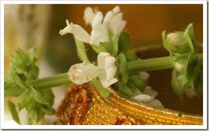 DSC05501-fiore di basilico