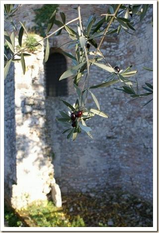 013 - Santuario di Vescovio - Le Olive
