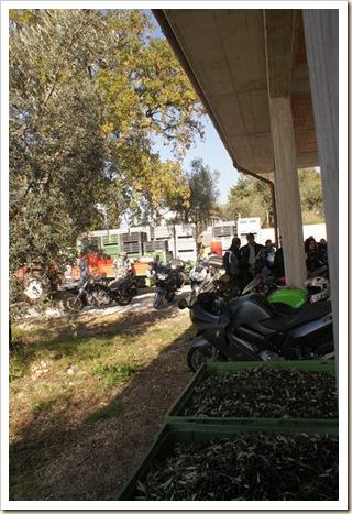023 - Moto e Olive a raccolta