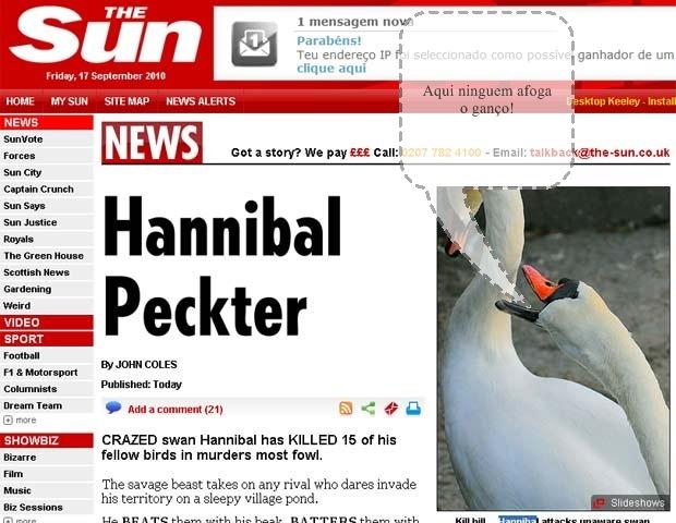 Cisne 'Hannibal' mata 15 rivais que invadiram seu território