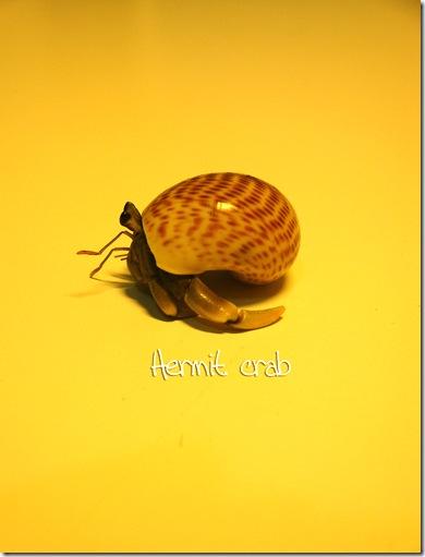 hermit27