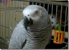 opapi_bird