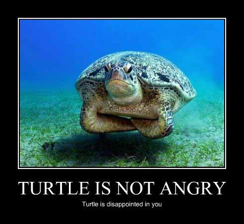 funny pictures turtle