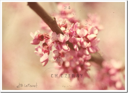 IMG_4777z copy_edited-1