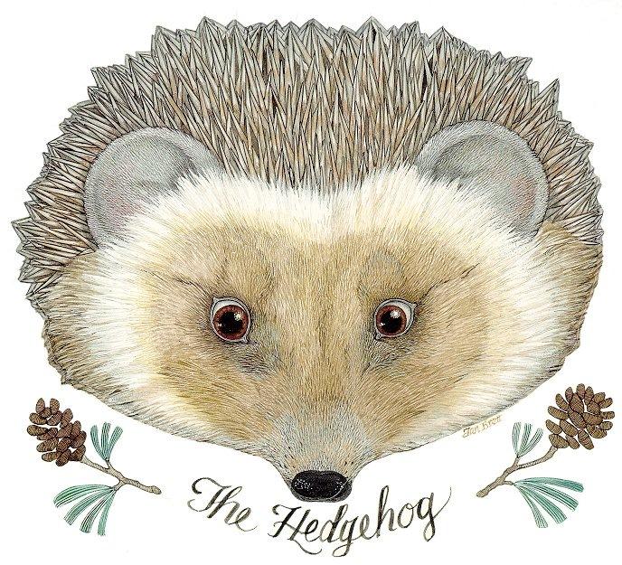[the_hedgehog[8].jpg]