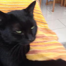 Black cat  by Yiannos Ioannou - Animals - Cats Portraits ( cat black blackcat )