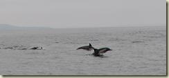 dolphinIMG_5096