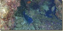 caletacandeleroschicoPC040265