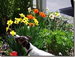 spring 09 028