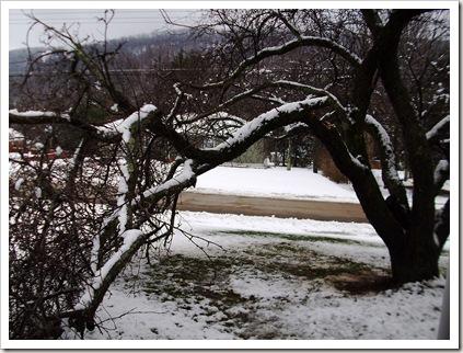 tree branch 011
